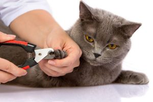 nail-clipping-of-veterinary